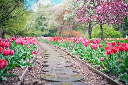 Как сделать садовую дорожку из бетона и тротуарной плитки
