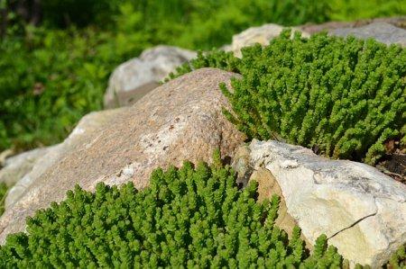 Красота на участке: альпийская горка своими руками