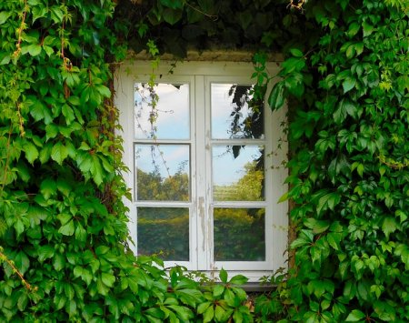 Вертикальное озеленение, немного полезных советов